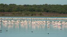 Doñana está tan amenazada como la Selva Amazónica o la Gran Barrera de Coral