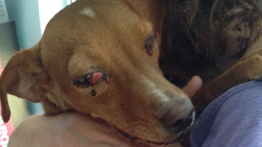 Canela, perra disparada en Albacete