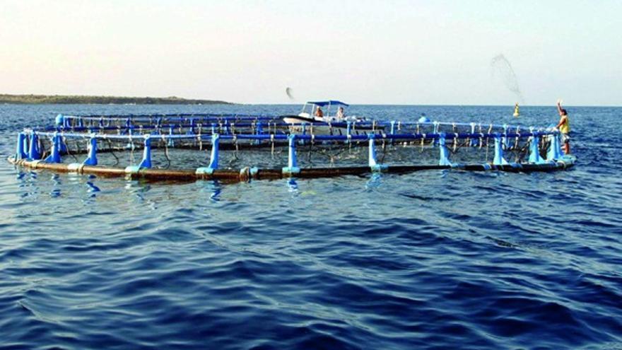 Explotación acuícola en la bahía de Los Cristianos, municipio de Arona (Tenerife)