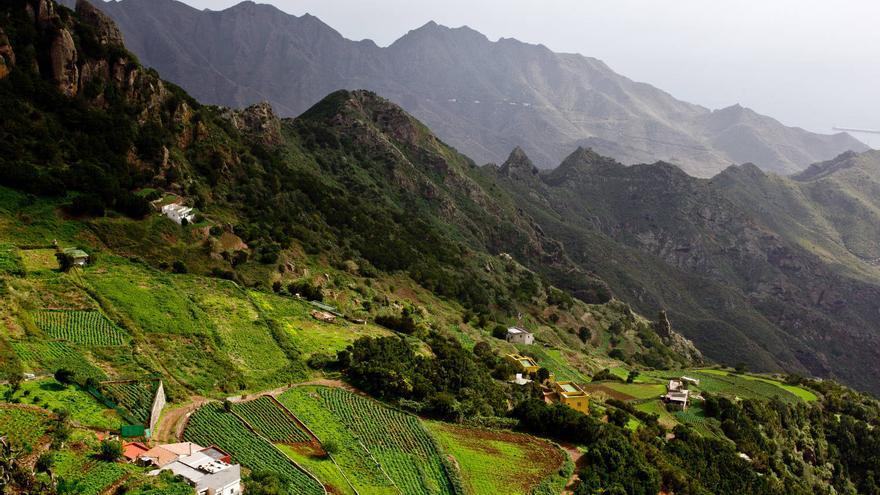 Terrazas de cultivo colgadas de las montañas en las Casas de la Cumbre, en el parque Rural de Anaga