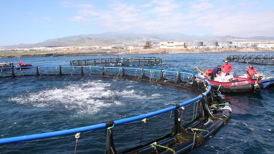 Granja marina de Salinetas, en Gran Canaria.