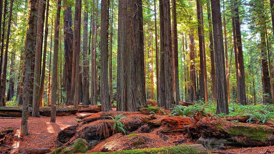 Giant Forest, California / Kirt Edblom vía Flickr (CC)