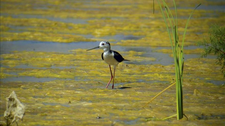 La convención Ramsar sobre humedales aprueba su plan estratégico para 2016-2021