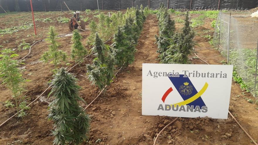 Plantación de marihuana encontrada en Agüimes