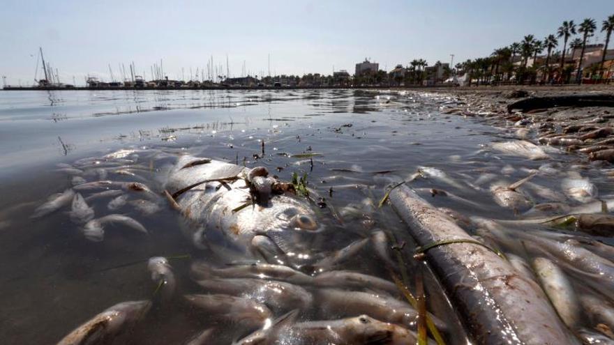 Peces muertos en playas del Mar Menor (Murcia).