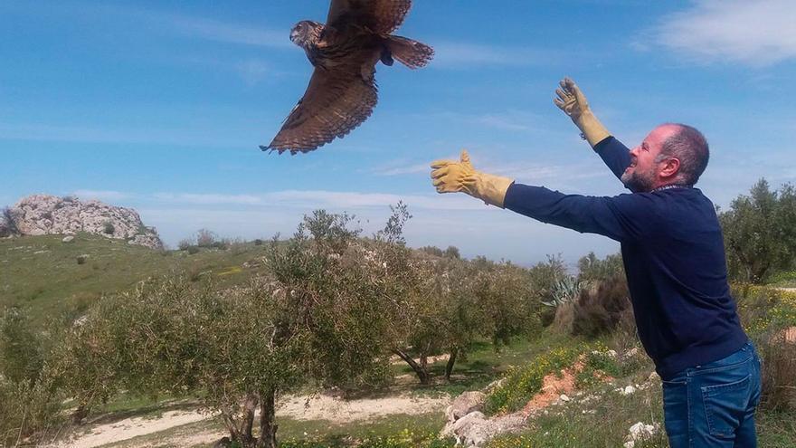 Suelta de las aves en Luque.