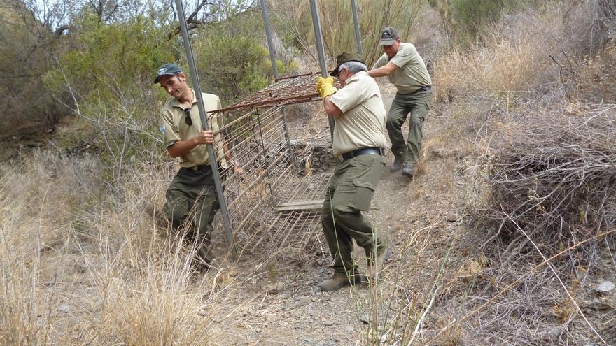 Retiran una jaula de grandes dimensiones para la caza furtiva en el Parque Natural Cabo de Gata-Níjar