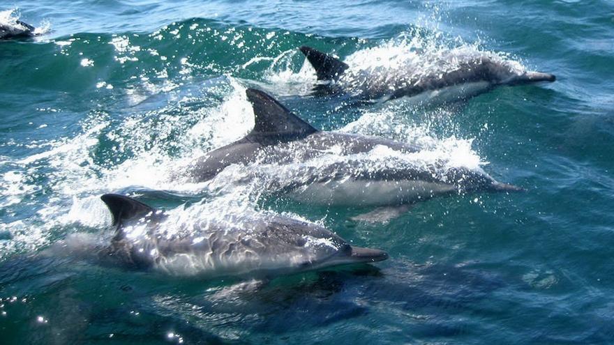 La WAZA se opone a la transformación animalista del zoo de Barcelona, pero durante diez años no se posicionó frente a la matanza de delfines en Taiji (Japón)