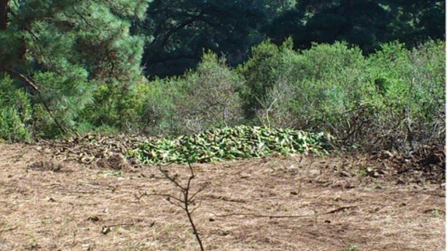 En la imagen, residuos plataneros vertidos en los montes de Garafía: Foto: JORGE HERNÁNDEZ.
