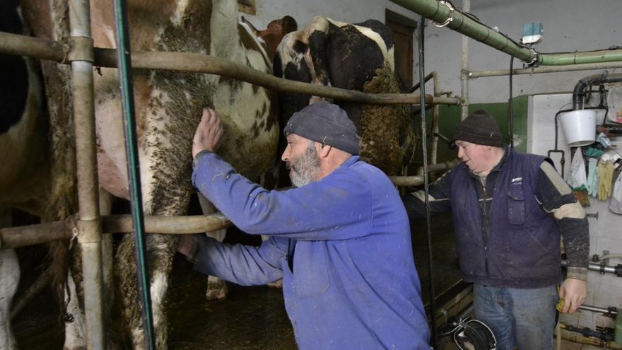 El próximo mes de abril entrará en vigor la liberalización del sector lácteo.