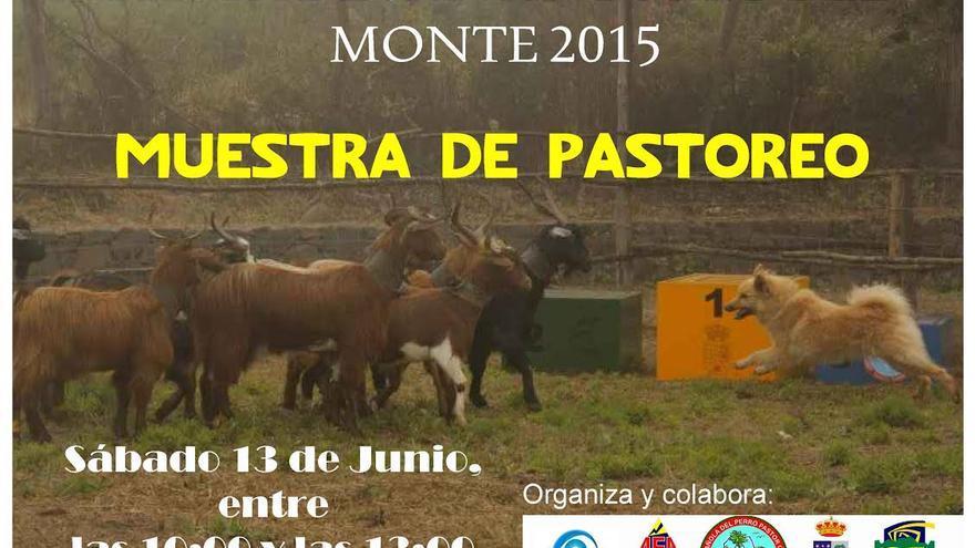 Cartel de la Muestra de Pastoreo enmarcada en el Concurso Monográfico de Perro Pastor Garafiano 'Antonio Manuel Díaz Rodríguez' que se celebrará el 13 de junio en la Fiesta de San Antonio del Monte.
