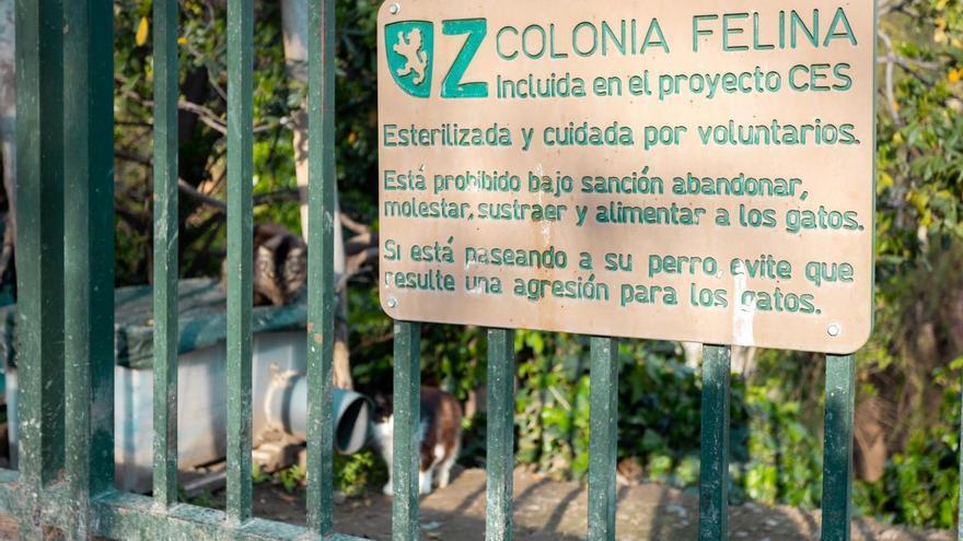 El Ayuntamiento de Zaragoza prevé esterilizar 749 gatos en lo que queda de año