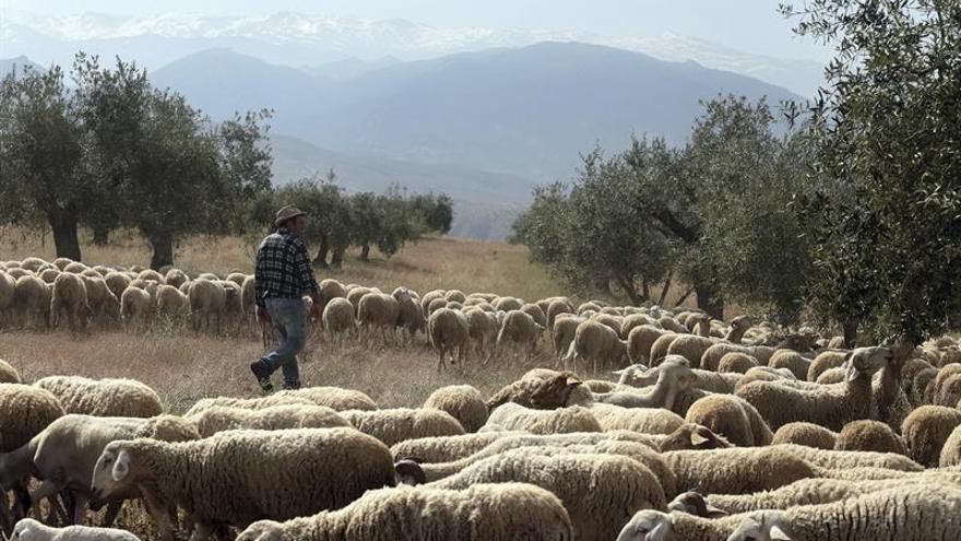 El Generalife recupera su pasto con un rebaño monumental