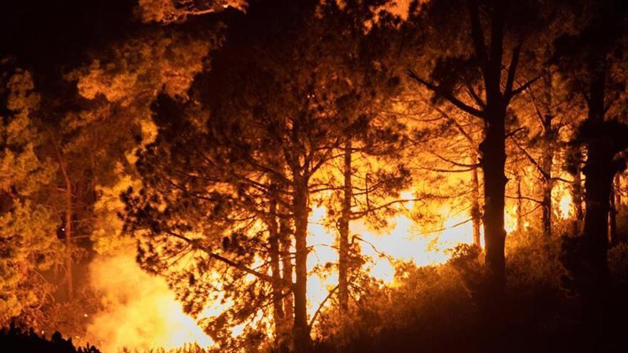 Se declara un incendio forestal en La Palma y el viento dificulta su control