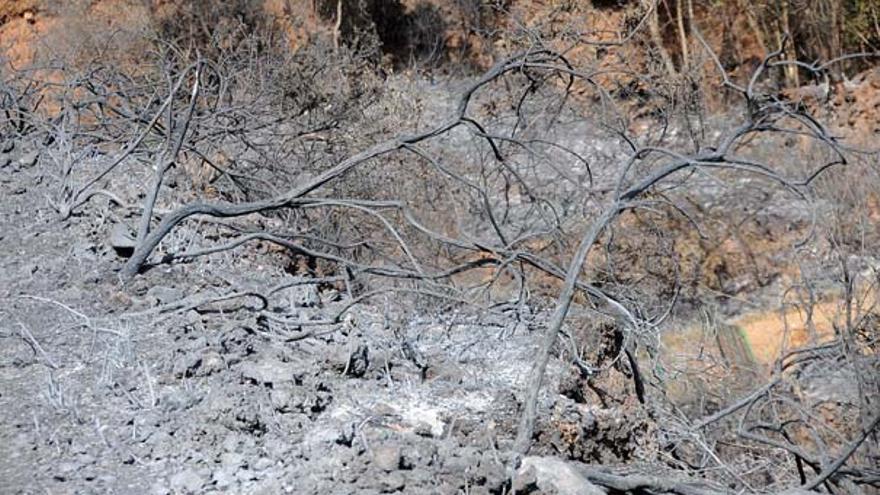 Del incendio en Tenerife #2