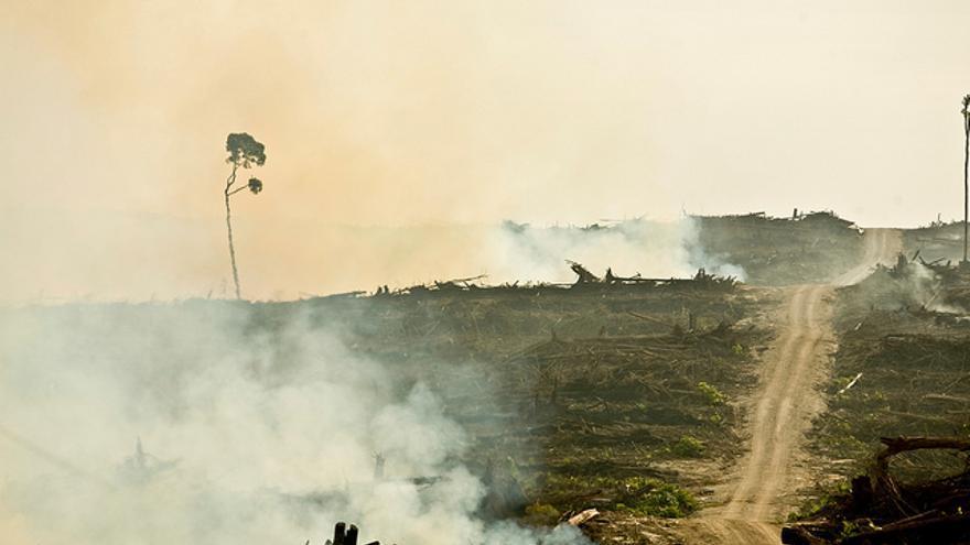 Consecuencias del cultivo de palma. Fuente: Cargill's Problems With Palm Oil, por Rainforest Action Network en Flickr con licencia Creative Commons by-nc/2.0