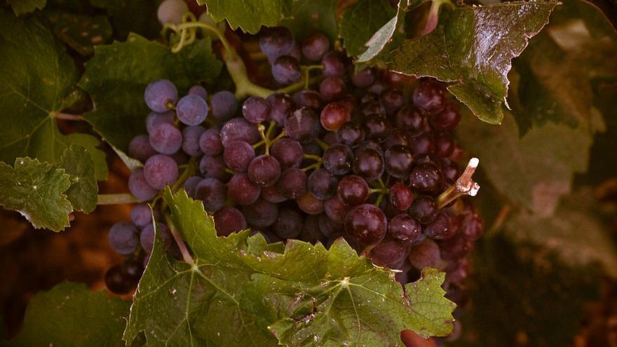 El vino del viñedo más grande del mundo es superado con creces en precio por el resto de las Comunidades. Foto: www.flickr.com/kirapollito