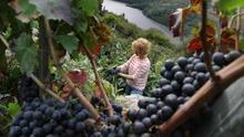Ourense: entre termas, viñedos e historia