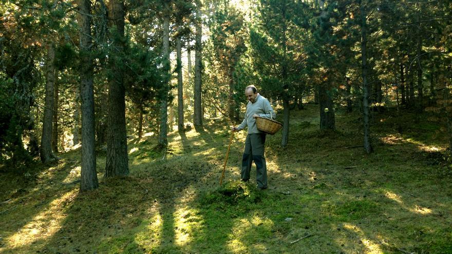 El autor buscando setas en un bosque de los Pirineos