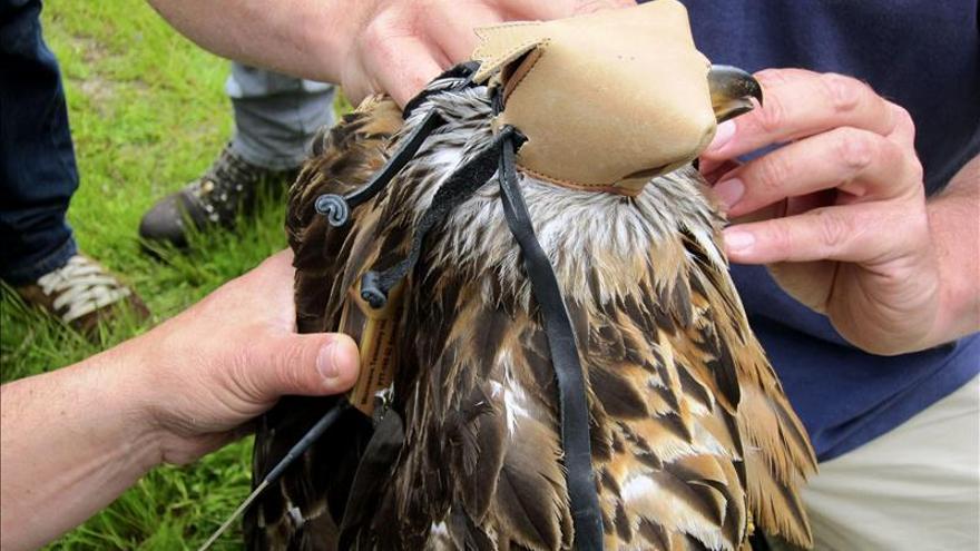 España, uno de los lugares más importantes del mundo para las aves migratorias