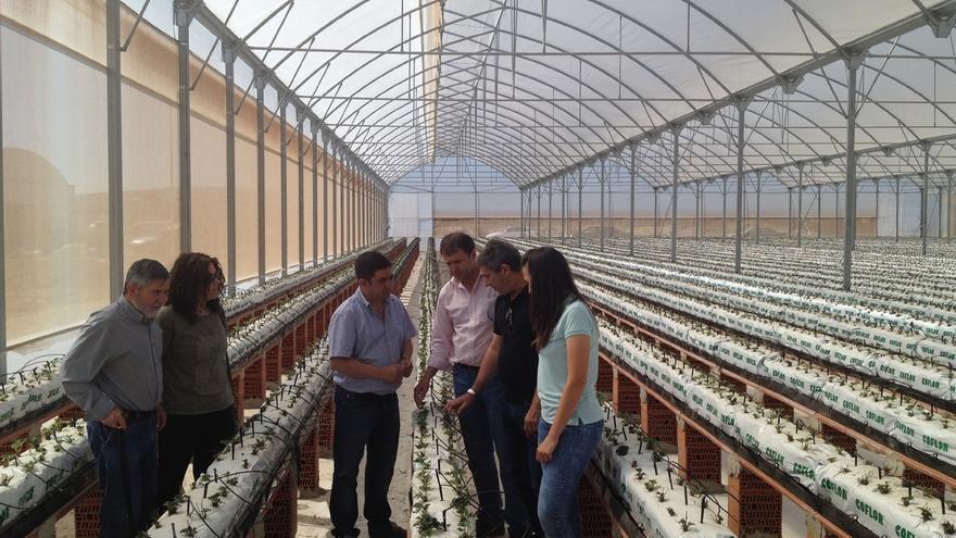 Hazafresa impulsa en Villanueva de la Reina un proyecto pionero para el cultivo de fresa en La Campiña