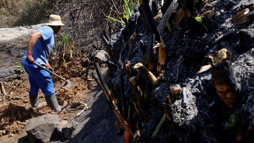 Un vecino de Tejeda intenta limpiar su finca tras regresar a su casa después del desalojo por el incendio de Gran Canaria.