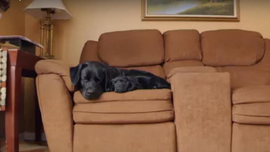 Captura del vídeo de la iniciativa 'Felices Fiestas Mascotas'