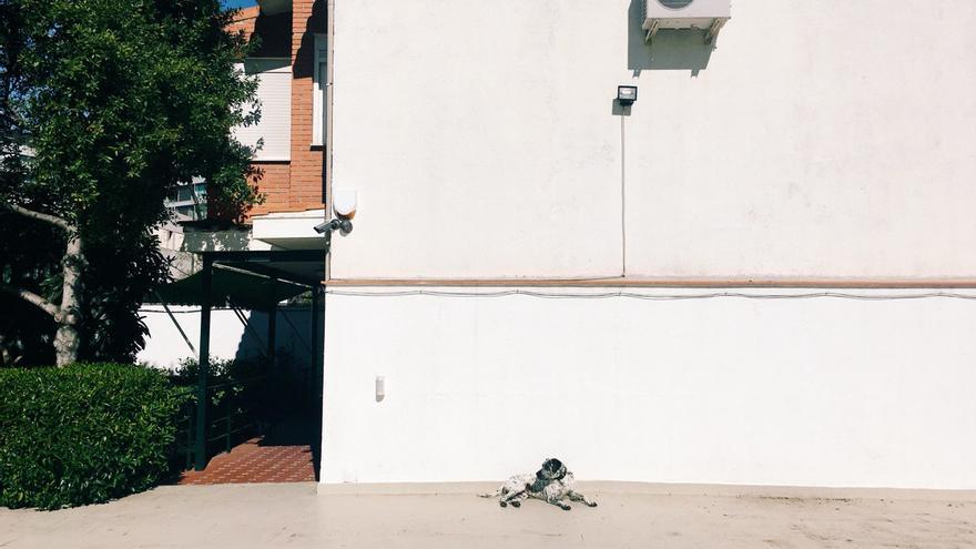 El perro de Margarita en su patio