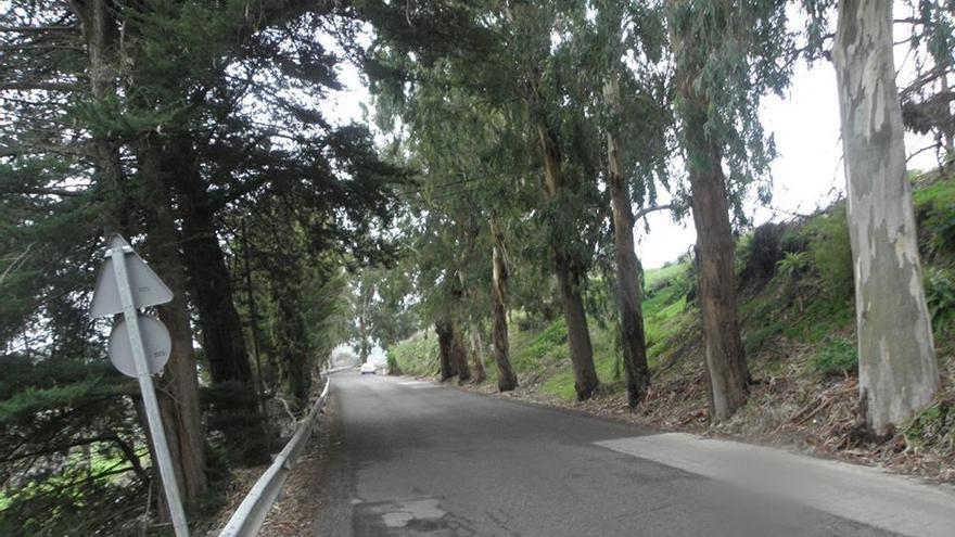 En los últimos años el paisaje isleño ha perdido centenares de árboles
