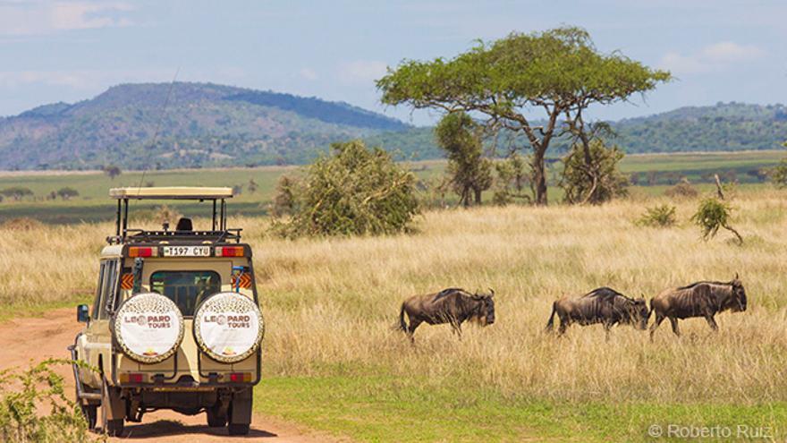 Safari en Parque Nacional Serengueti