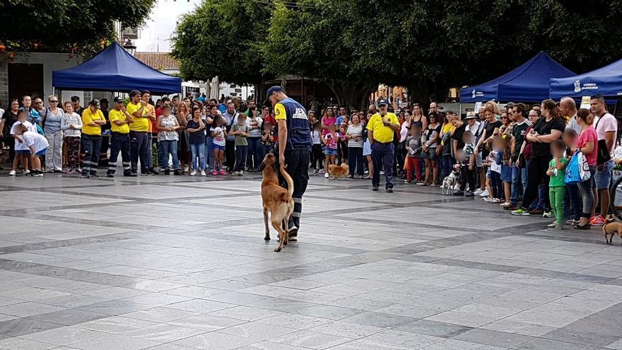 Los perros de AEA participaron en la feria.