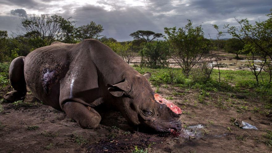 Rhino Wars / Brent Stirton, South Africa, Getty Images for  National Geographic Magazine