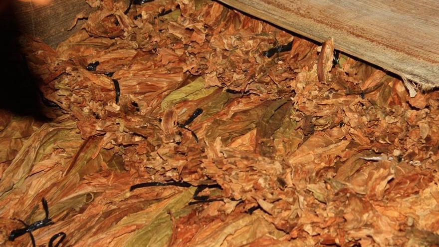 En la imagen, hojas secas de tabaco de La Fábrica.