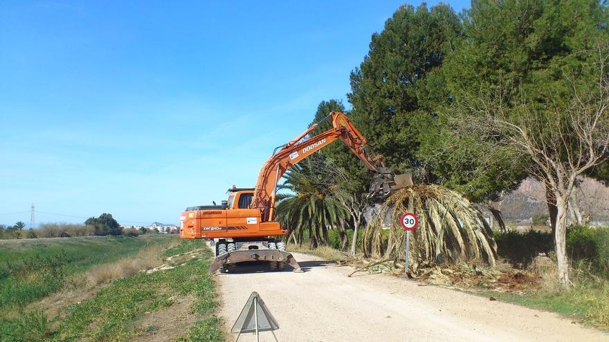 PSOE reclama al Gobierno un plan de control y erradicación del picudo rojo, coordinado con las CCAA y Ayuntamientos