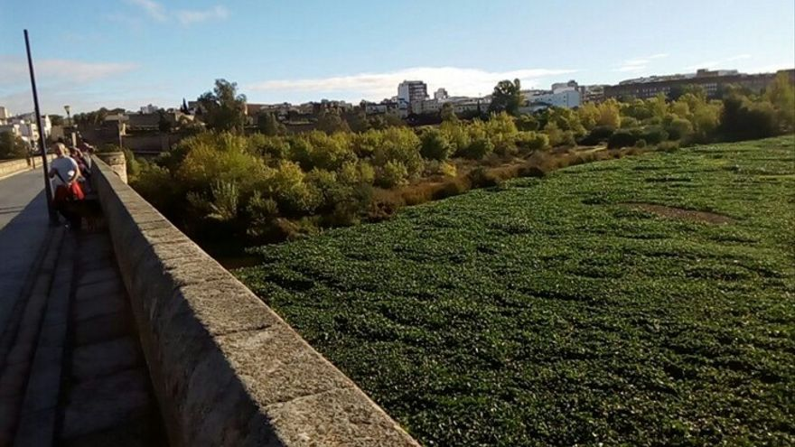 El camalote, junto al Puente Romano de Mérida e