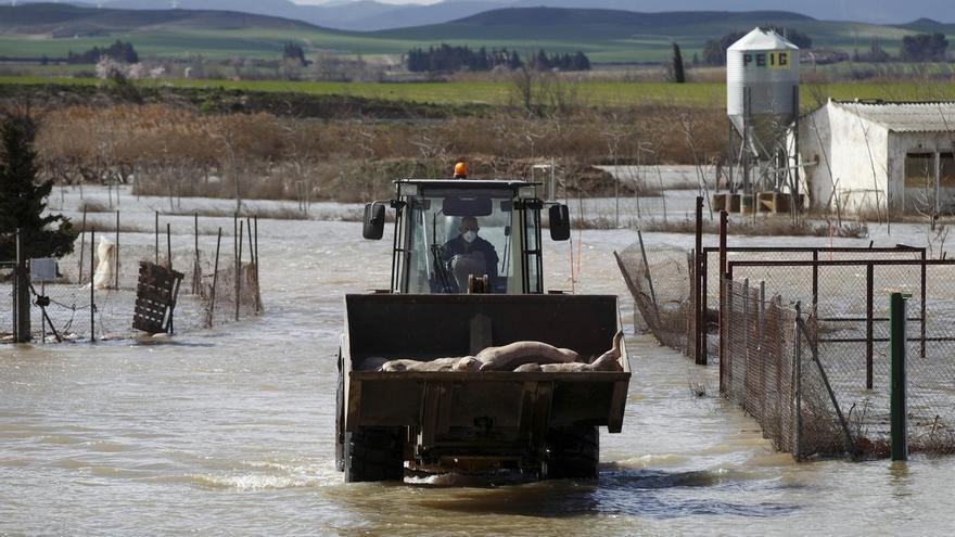 Comienza la retirada de cadáveres de animales en las zona afectadas por la riada