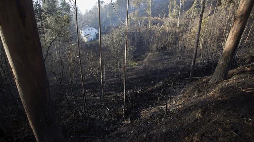 Asturias reduce a una veintena los incendios forestales, ninguno de gravedad