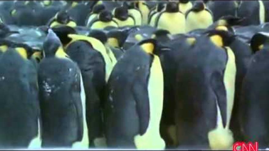 Pingüinos en la tele