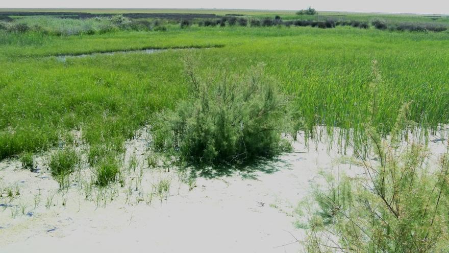 Unesco debate en junio el caso de Doñana con alusión a posible inscripción como Patrimonio Mundial en Peligro