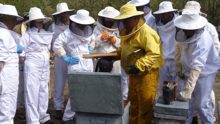 Martínez Arroyo abre la puerta a estudiar la petición de apicultores de paliar efectos de sequía en producción de miel