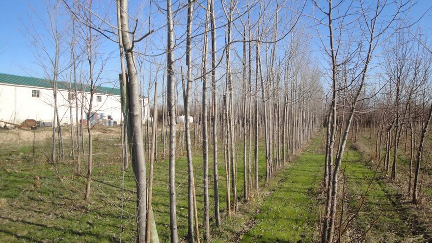 El gobierno de navarra relanza la producci n de plantas for Viveros en navarra
