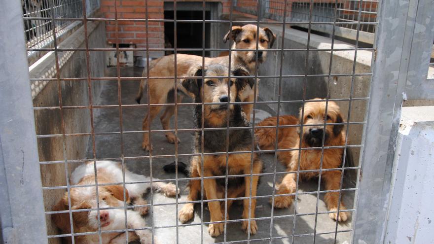 Uno de los boxes del centro de animales de València repleto de perros