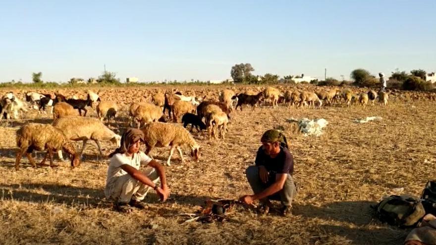 Abded y Yehya junto a su rebaño de ovejas.