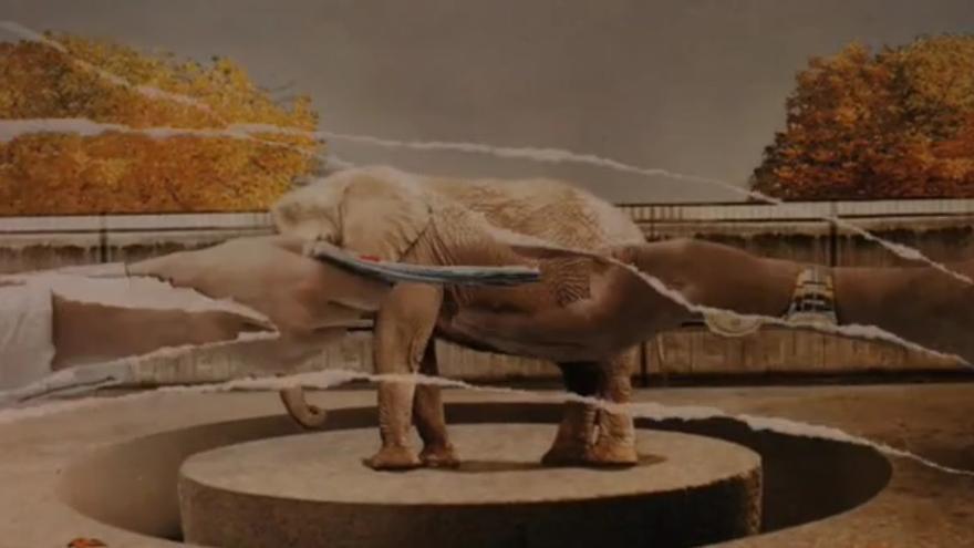Susi, una elefanta en la habitación