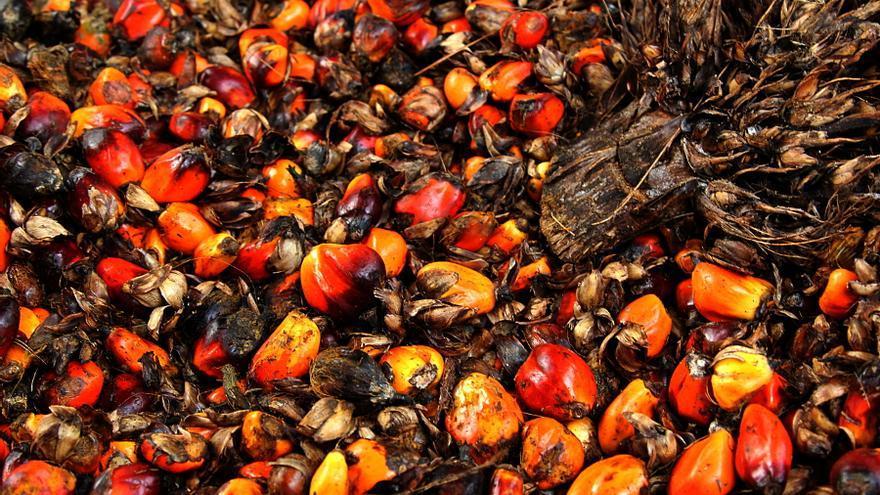 Frutos rojos aceite de palma. Fotografía Laura Villadiego