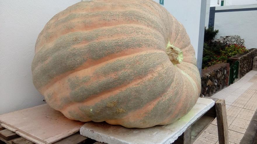 Calabaza gigante de 340 kilos. (RCI).