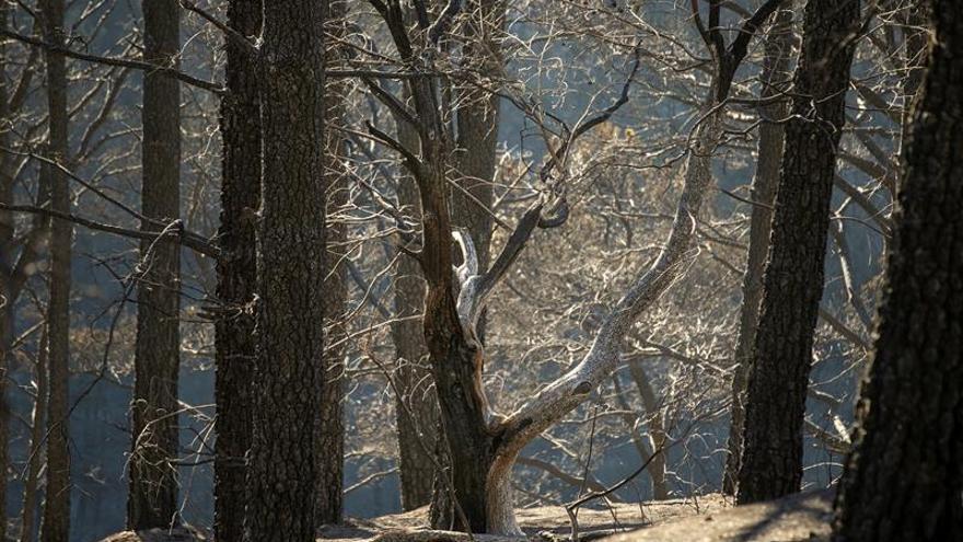 Zonas afectadas por el fuego del incendio forestal, en el Barranco Los Pajaritos (Cueva Corcho).