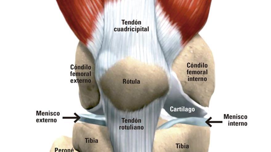 El cartílago articular es un tipo de tejido que se encuentra presente en todas las articulaciones del cuerpo humano. Este tejido recubre las facetas o bordes articulares evitando el roce entre las superficies óseas.