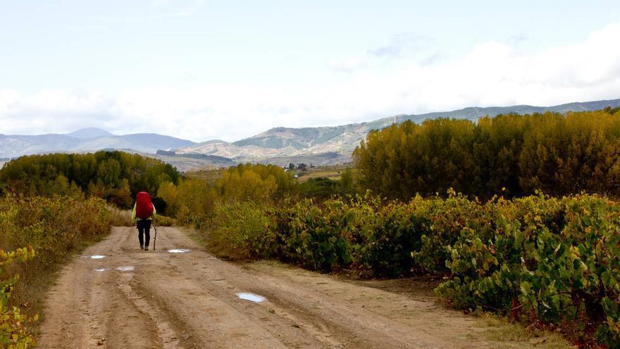 Un peregrino avanza entre viñedos en la 'Hoya del Bierzo' a unos kilómetros de Ponferrada.