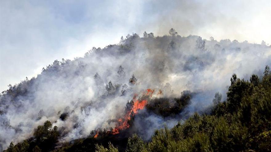 Unas 2.000 hectáreas afectadas entre los incendios de Bolbaite y Carcaixent